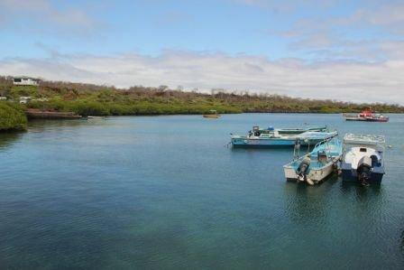 Galapagos__Hani_Itani.jpg