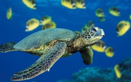 tortue en pleine mer