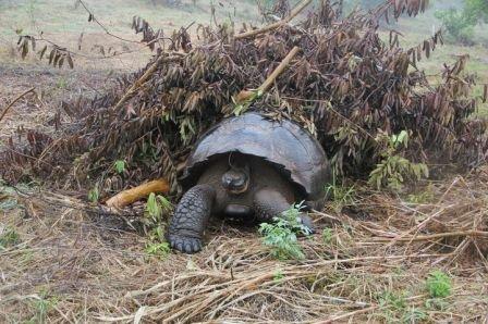 Galapagos_Turtle_-2__Hani_Itani.jpg